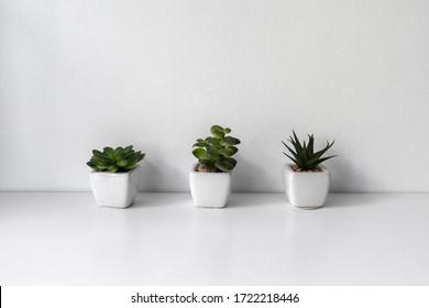 Green decorative flowers in white pots in a white interior. White color.