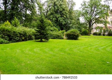 Green decorative garden. Neutral landscape with a green field. Landscape park.