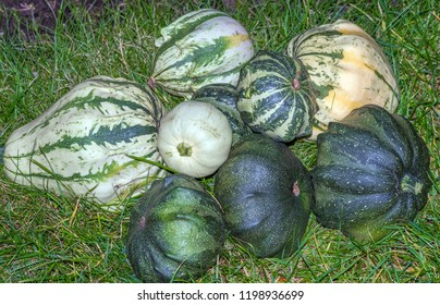 green decorative pumpkins