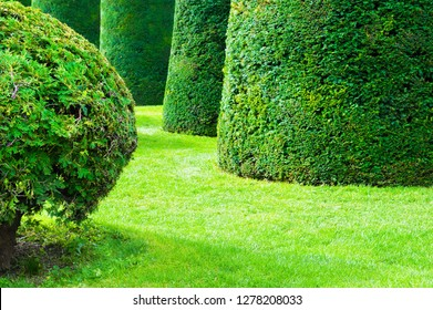 Green decorative trimmed trees in a park. Summer nature background