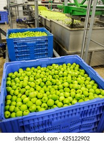 Green delicious apples in packing tub at fruit warehouse