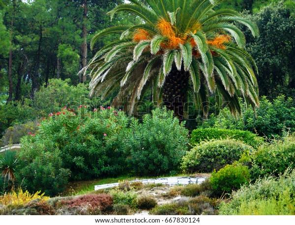 Green Design Tropic Garden Tropical Coast Stock Photo Edit Now