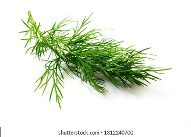 green dill branch isolated on white background