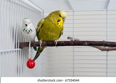 A green domestic budgie sitting with his toy friend.