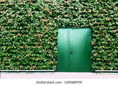 Green doors and wall made of green plants. Trendy interior. Mock-up pictire, place for text