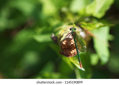 Green dragonfly with great detail
