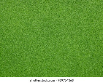 green duckweed on water in the lake