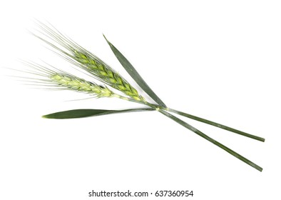 green ears of wheat isolated on white background, top view