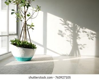 Green eco building concept. indoor green tree in office area for clean fresh air