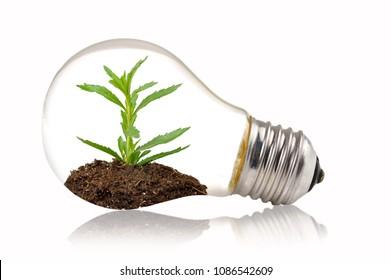 Green eco energy concept. Plant growing inside light bulb