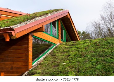 Green ecological sod roof on wooden building covered with vegetation mostly sedum sexangulare, also known as tasteless stonecrop