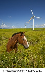 Green ecology, Alternative green energy wind turbines and horse