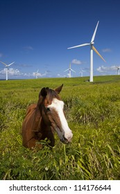 Green ecology, wind power turbines in Hawaii and horse