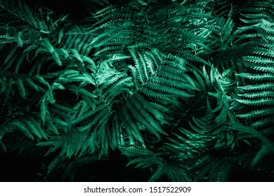 Green emerald moody color nature background trend. Tropical leaves of fern plant.