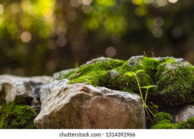 Green  emerging on a rock