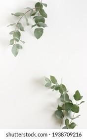 green eucalyptus leaves frame top view isolated on white background with copy space. flat lay, poster
