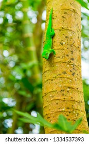 Green exotic lizard crawls on tree trunk