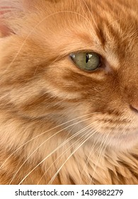 Green eye orange tabby lion looking cat eye with white cat whiskers face close-up