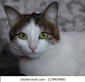 Green eyed cat looking at camer