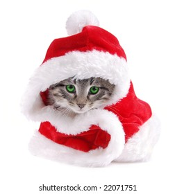 A green eyed kitty wearing a Santa outfit.