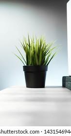 Green fake plant minimalis design