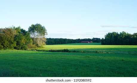 green farm field and woods under morning sunlight