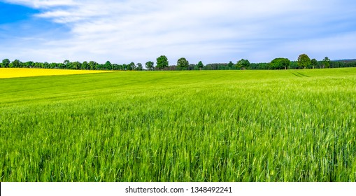 Green farm, panoramic view of farmland, crop of wheat on field, spring landscape - Shutterstock ID 1348492241