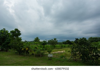 green farm under rainny could