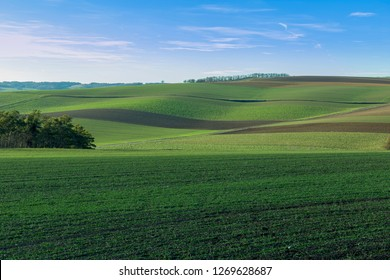 Green farmland in springtime