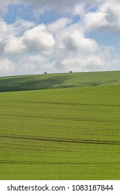 Green farmland in sussex on a sunny spring day