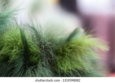 Green feathers to decorate birch twigs with for Easter celebration in Sweden.