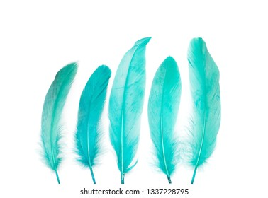 Green feathers over white background