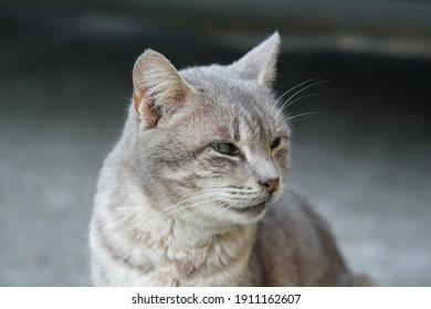 Green feline eyes cat face portrait close up,feline pet animals wallpaper