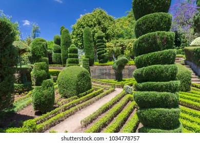 Green fence art in botanical garden, Funchal Madeira island