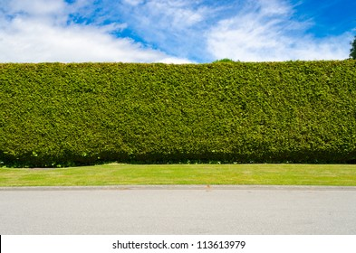 green fence with green lawn