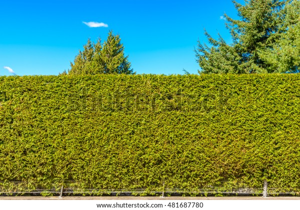Green fence. Security and privacy concept.