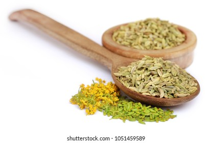 Green fennel seeds with flower over white background