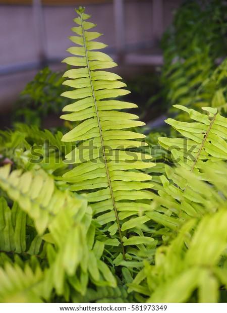 Green fern close up