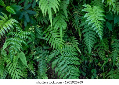 Green fern foliage and grass, forest leaf texture photo. Wild nature floral background. Fresh fern foliage closeup. Leafy natural pattern. Summer forest card template. Decorative leaf banner