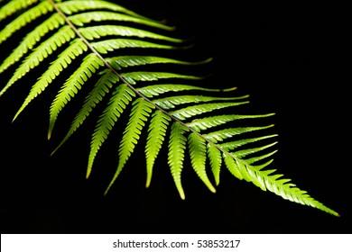 Green fern leaf