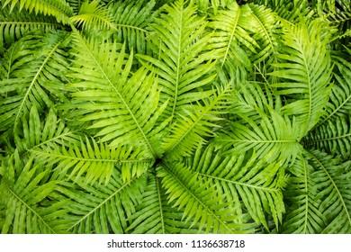 green fern leaf background