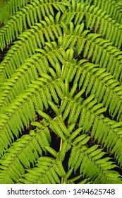 green fern leaf detailed background