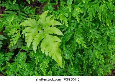 Green fern leaf pattern background