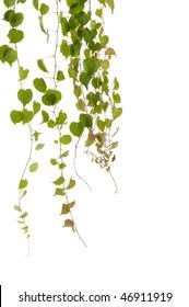 green fern leaves against white