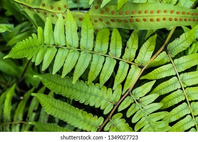 A green fern leaves, Flora of the Pyrenees