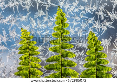 Green Fern Leaves Form Christmas Tree Stock Photo Edit Now