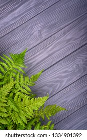 green fern leaves on gray oak wood background with copy space