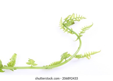Green fern leaves on white background