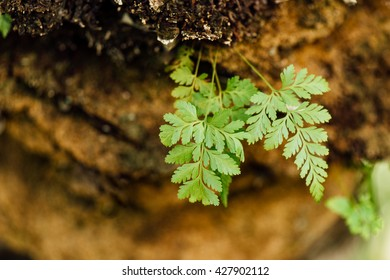 green fern on the tree