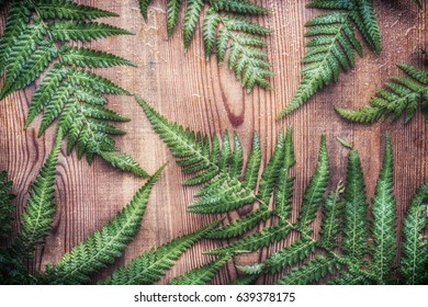 Green fern plant leaves on rustic wooden background, top view